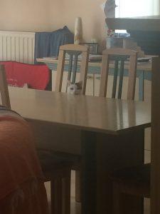 Week in my life back to Schoo: Witte watching me leave